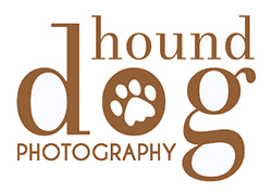 kent and sussex dog photography - the hound dog photography co