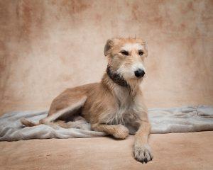dog photoshoot for Worzel Wooface