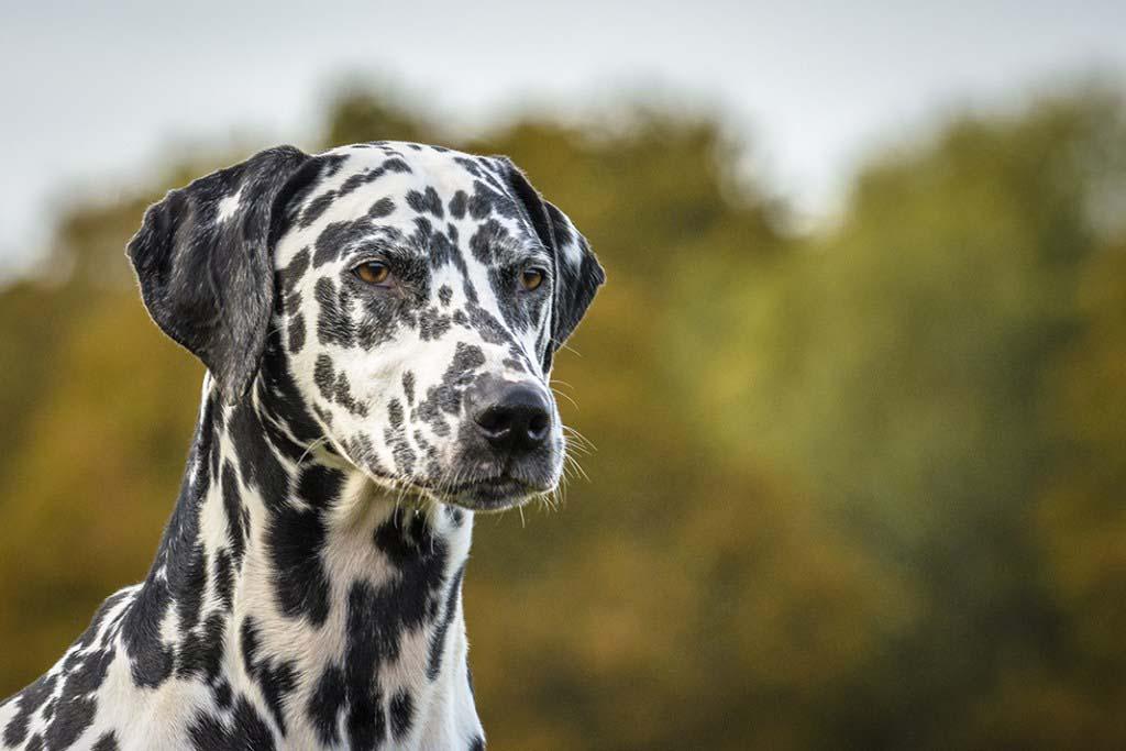 Hound Dog Photography Pet Photographer Surrey Berkshire Hampshire