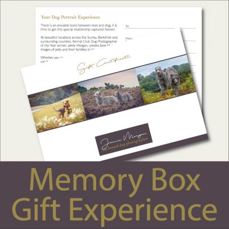 Hound Dog Photography Memory Box Dog Photoshoot Gift Experience