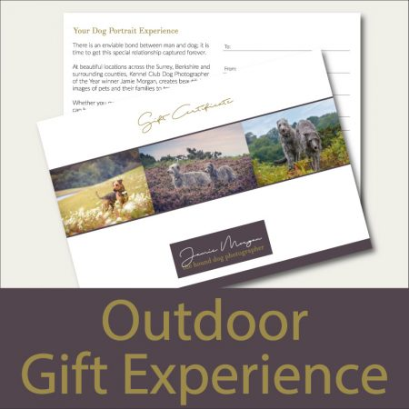 jamie morgan dog photographer outdoor dog photography gift experience