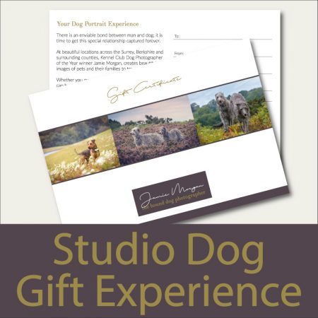 Hound Dog Photography Studio Dog Photoshoot Gift Experience