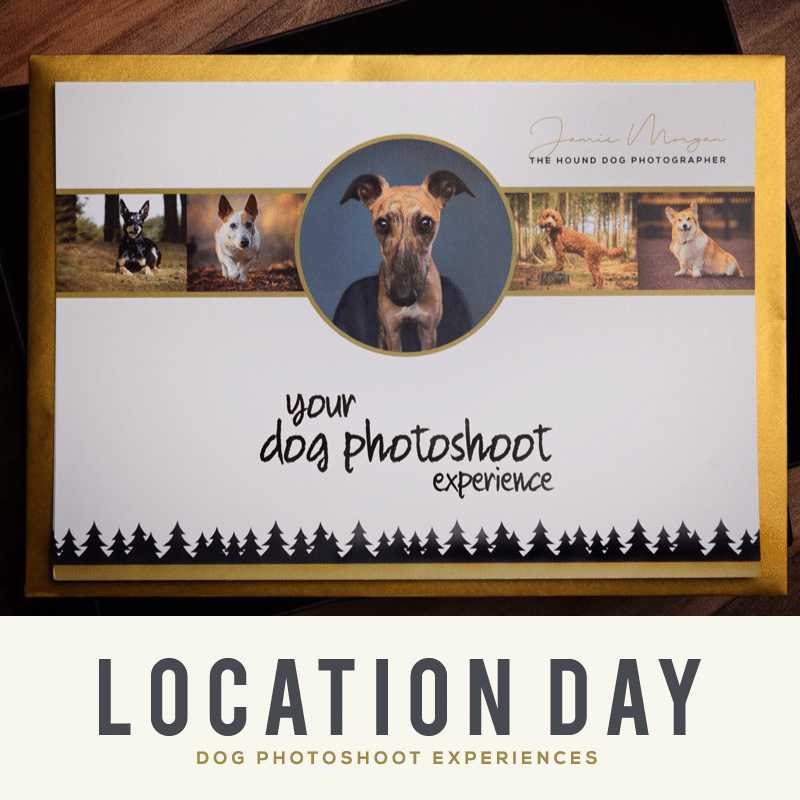 Location Day Dog Photoshoot Gift Experience