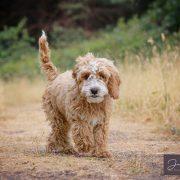 dog model dog photographer model application