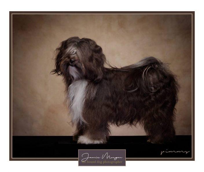 national dog portrait awards