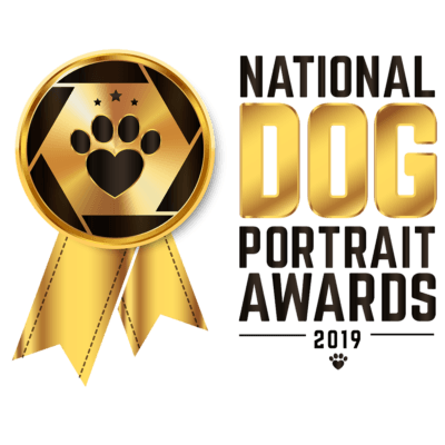 Dog Portrait Awards Mini Shoot (Studio Midweek)