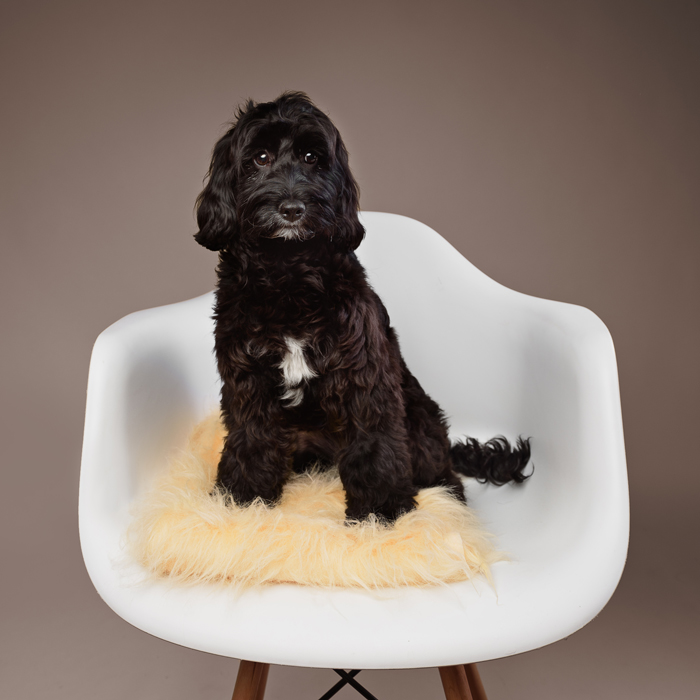 Studio Dog Photoshoot Experience & Glass Frame