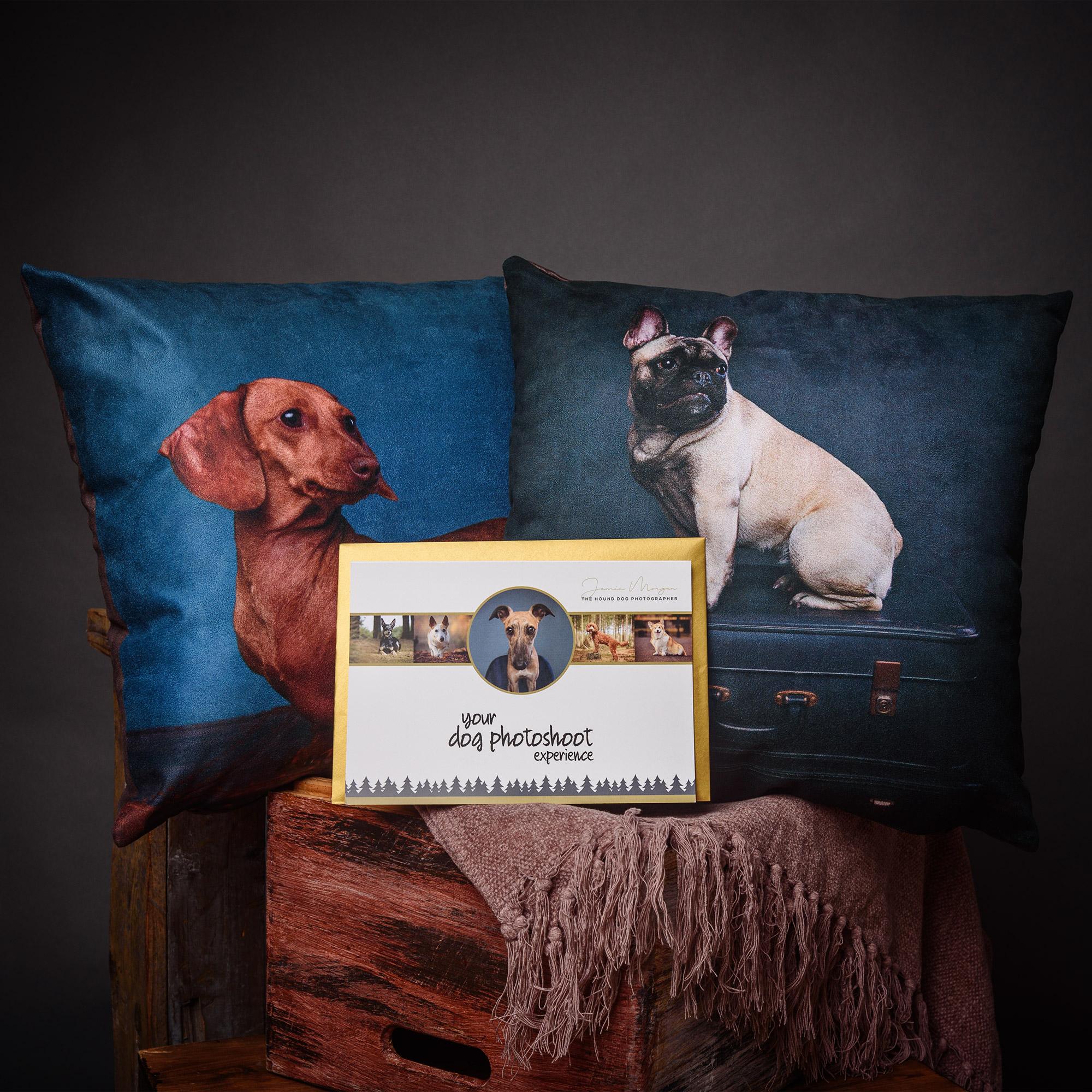 Cushion & Studio Dog Photoshoot Experience